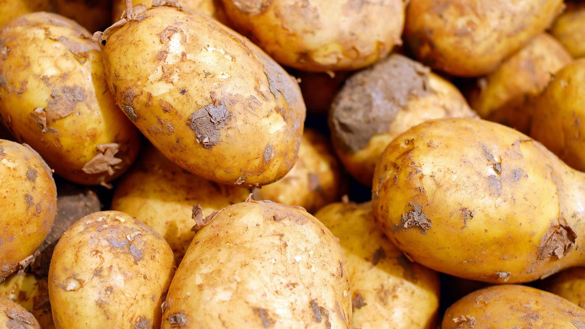 Kann man kartoffeln die keimen noch essen