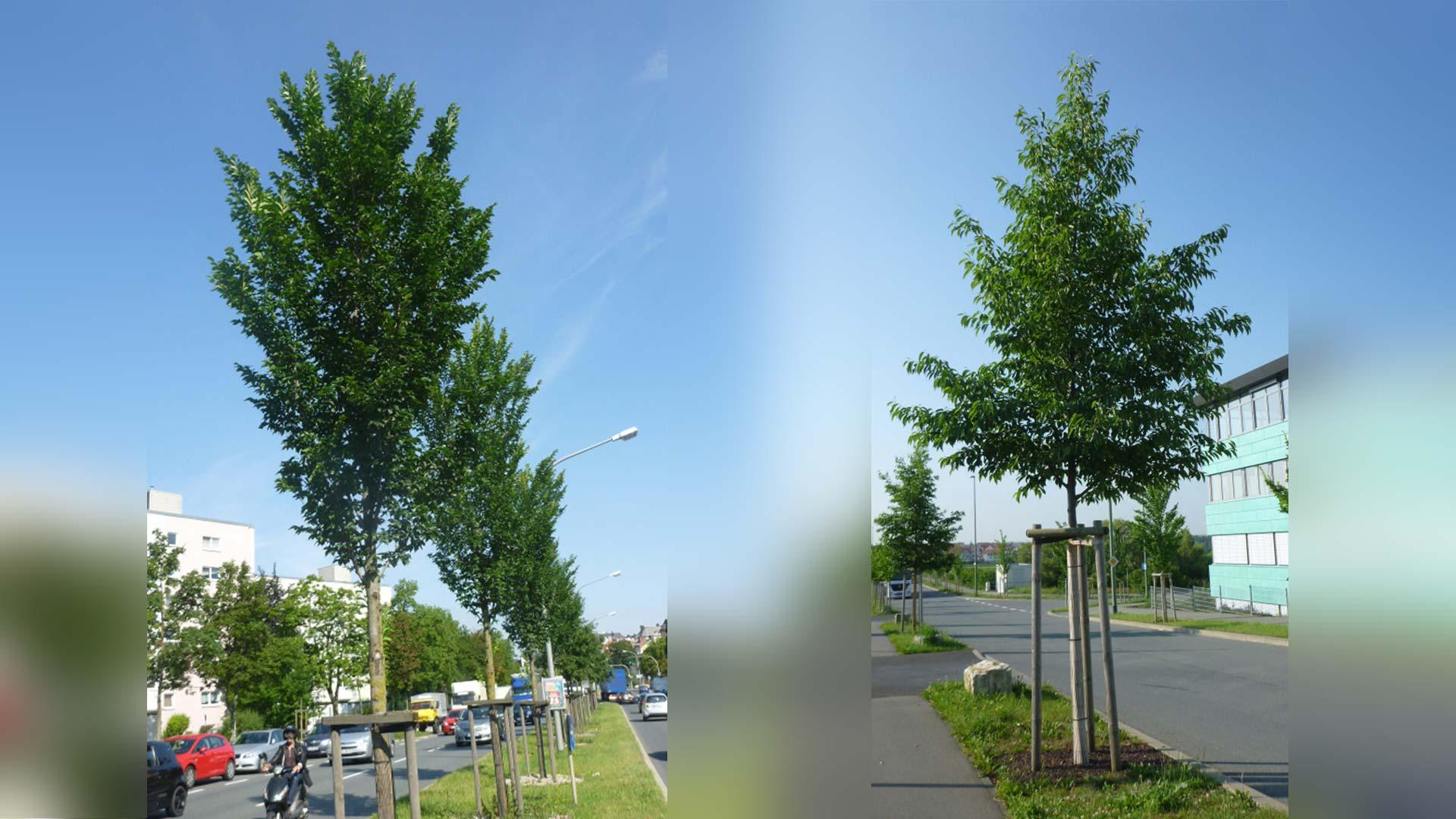 Baumarten, die mit dem Klimawandel zurecht kommen