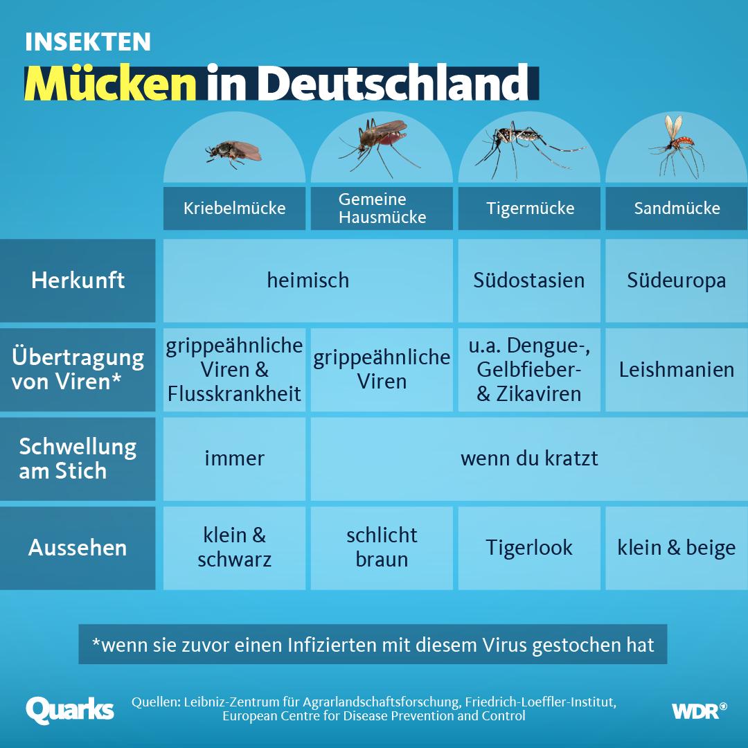 Verschiedene Mückenarten im Vergleich Grafik: WDR