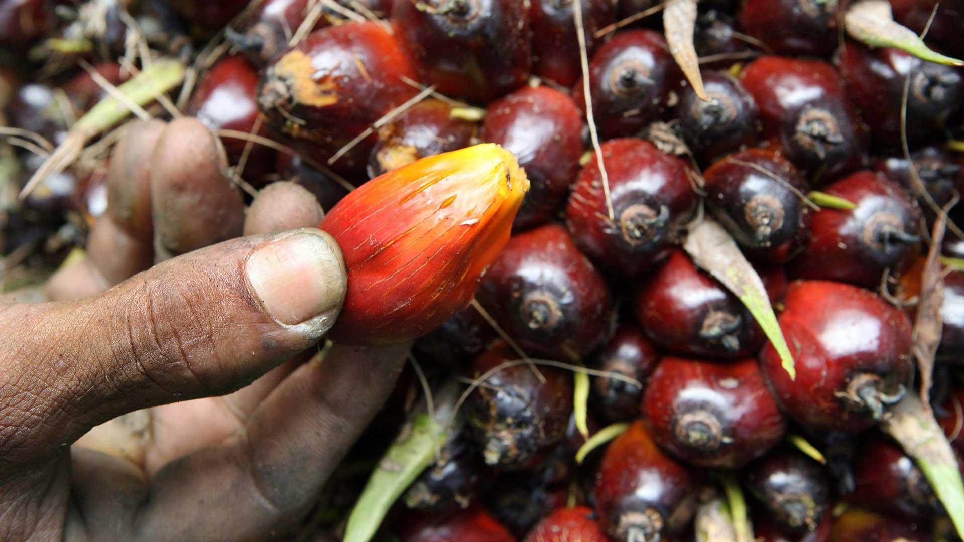 So ungesund ist Palmöl