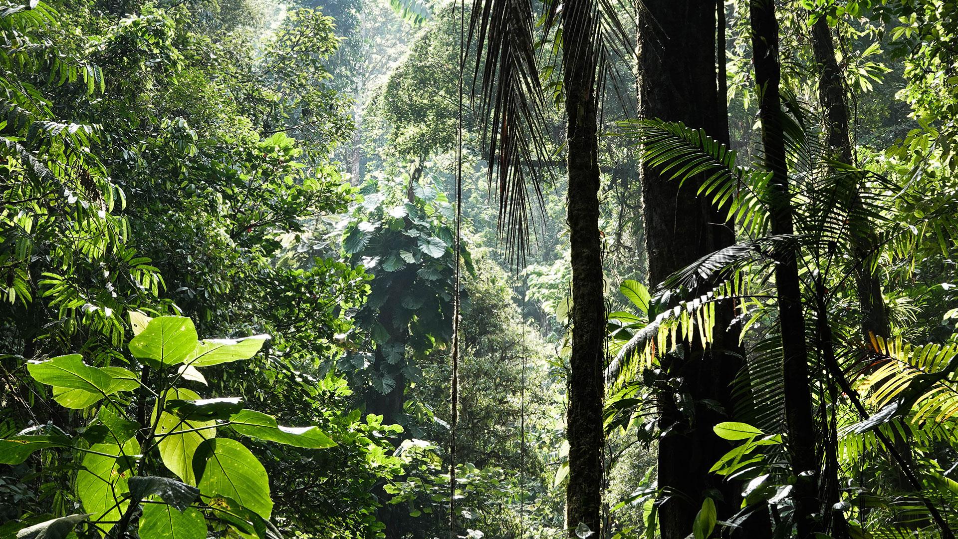 Der Regenwald in Brasilien wird immer kleiner und immer zerstückelter.