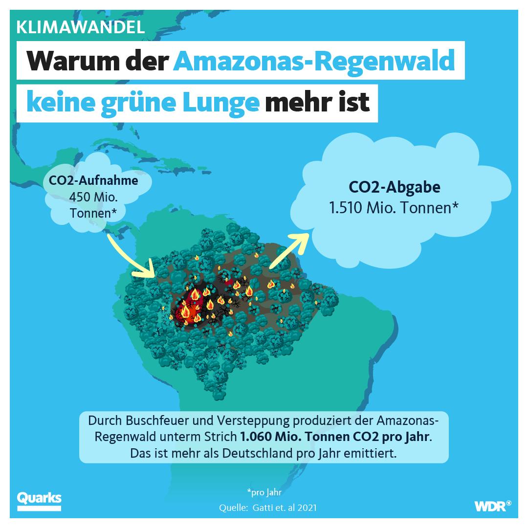 Warum der Amazonas-Regenwald keine grüne Lunge mehr ist
