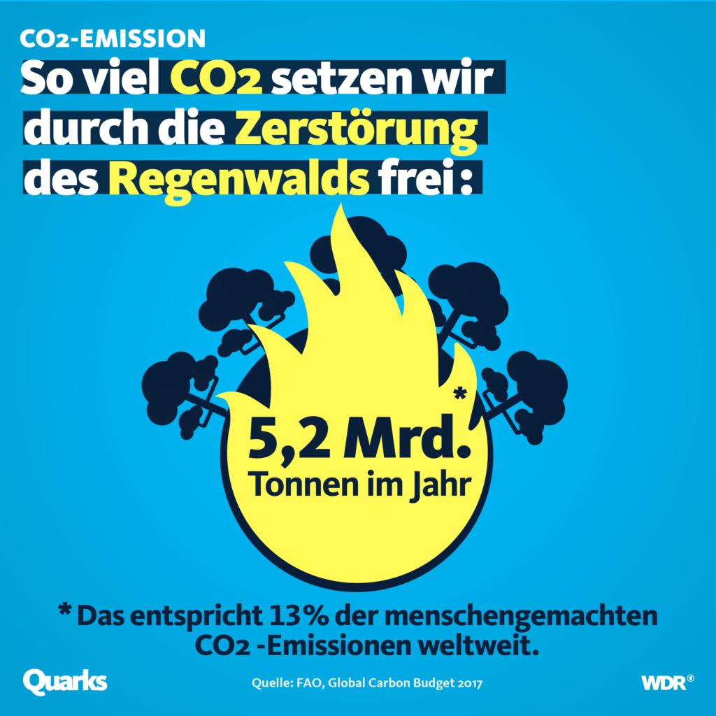 CO2 Emissionen Regenwaldungrodung
