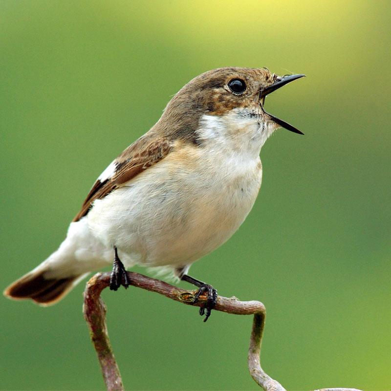 Sollte Man Das Ganze Jahr über Vögel Füttern Quarksde
