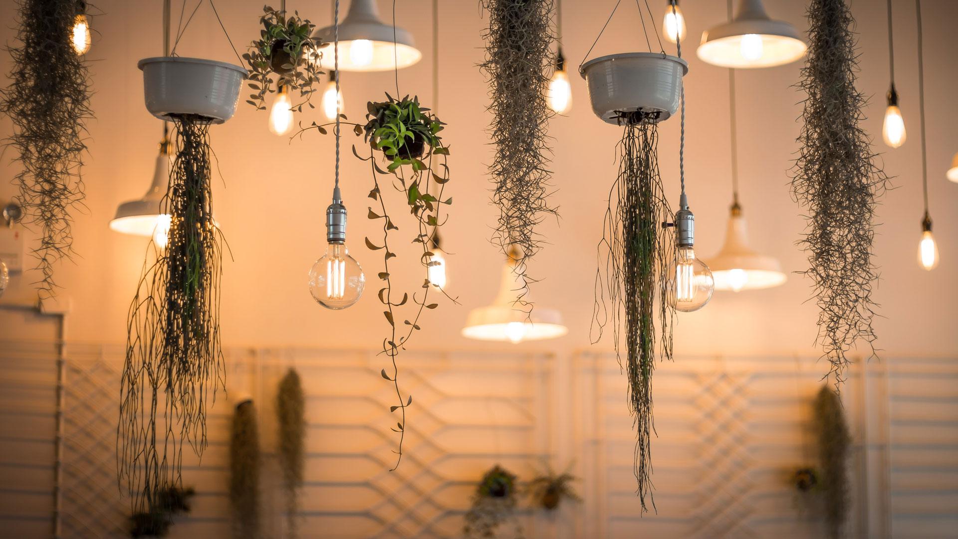 Lampen und Hängepflanzen hängen von der Decke