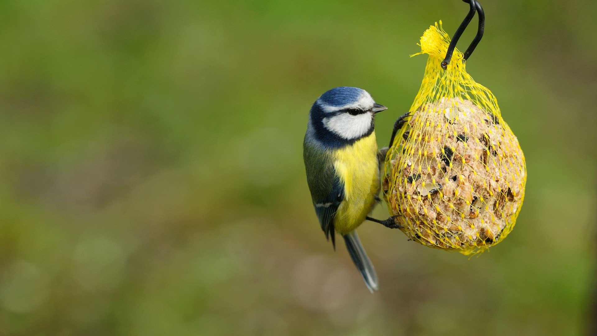 Sollte Man Das Ganze Jahr Uber Vogel Futtern Quarks De