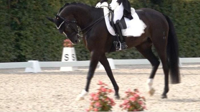 Dressurpferd beim Aachener CHIO