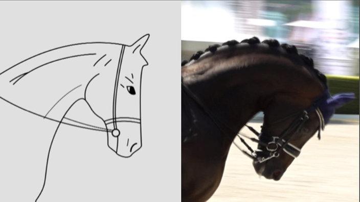 Vergleich der Kopfhaltungen des Pferd