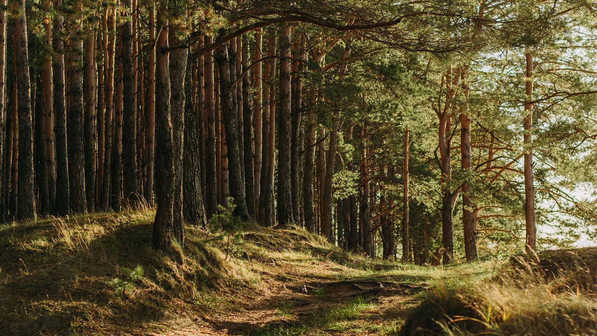 Waldrand im Sonnenschein